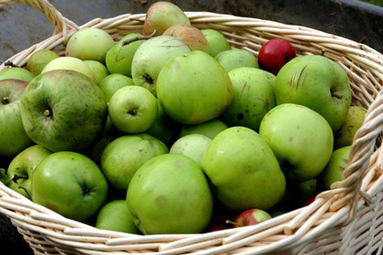 Las manzanas son organismos vivos, igual que nosotros.