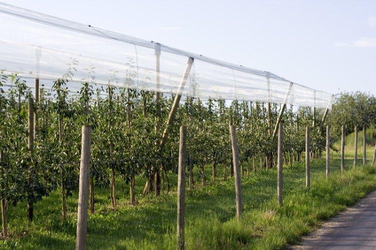 Arboles de huerto con frutas variadas, frutos secos y otros productos.