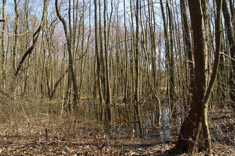 Los pantanos tienen árboles o arbustos.