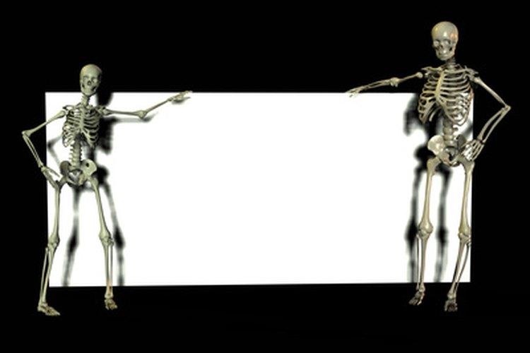 → ¿Cuáles son los principales órganos del sistema esquelético ...