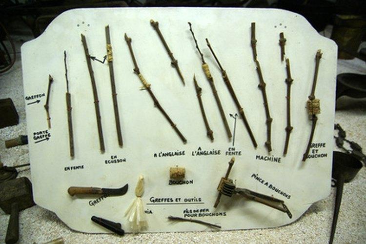 Para cultivar un peral idéntico a la variedad original, usa un injerto de púa.