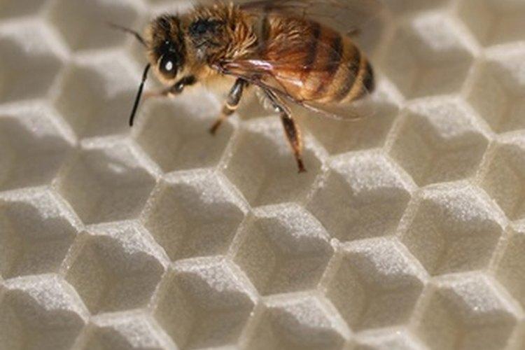 Juega con palabras sobre abejas y cera para crear el nombre de una compañía de velas de cera.