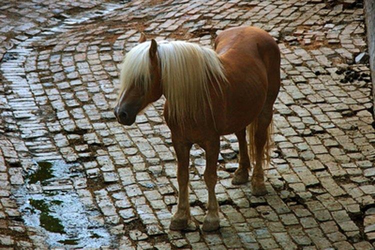 Realza tu imagen sobre tu caballo con el atuendo adecuado.
