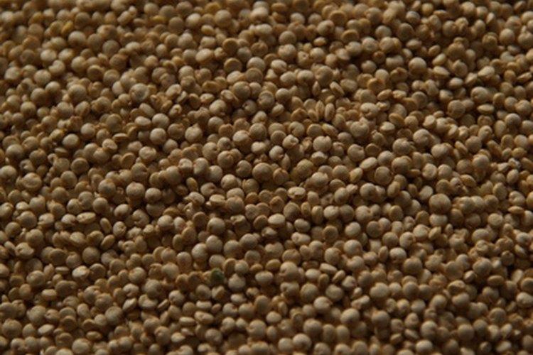 La quinua es una semilla que puede hacerse brotar y comerse cruda.