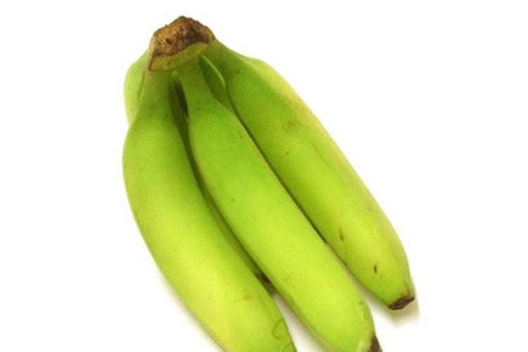 Los plátanos son un alimento básico en muchas culturas caribeñas e hispanas.