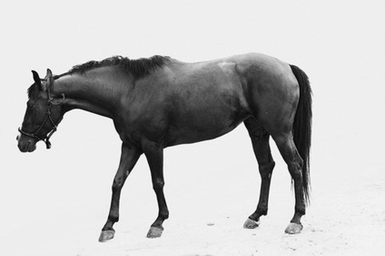 El transporte de caballos a México debe seguir las regulaciones mexicanas y de la USDA.
