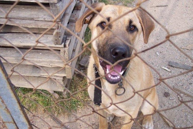 Los perros de raza mixta a menudo tienen características identificables de las razas populares.