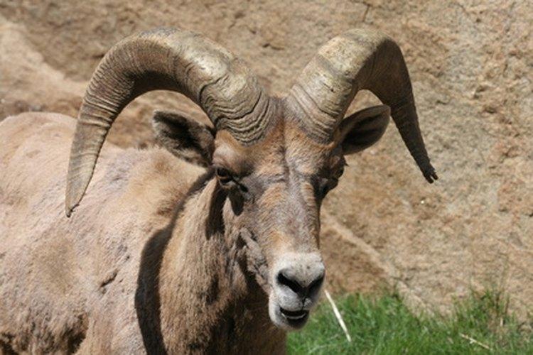 Una economía tradicional se basa en parte en la ganadería de animales como las cabras.