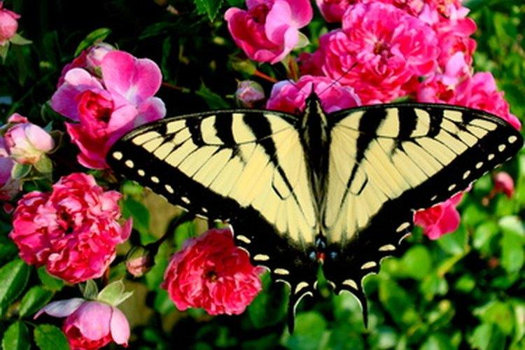 Los insecticidas también pueden lastimar a los insectos útiles.