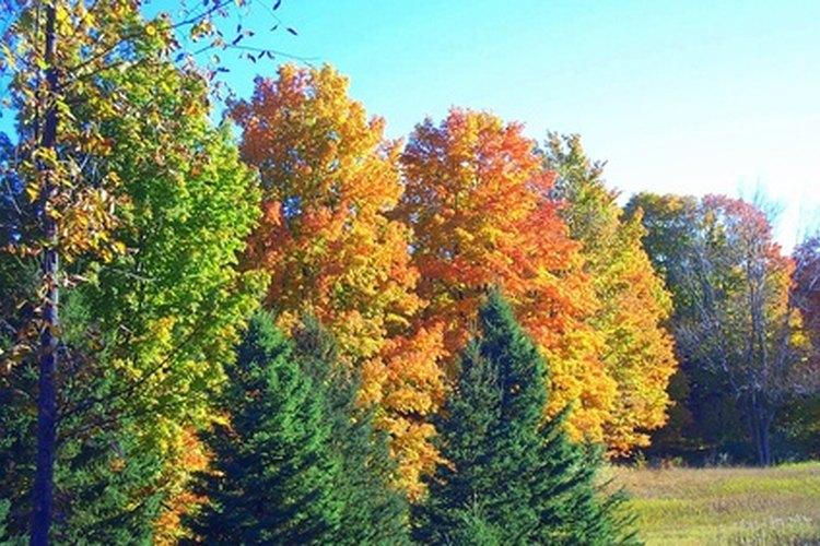 Busca en la naturaleza para encontrar colores que combinen con el verde bosque.