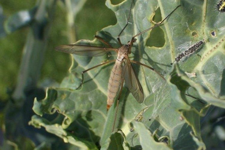 Repelente de insectos.