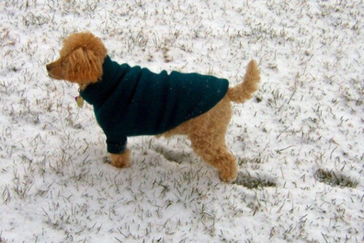 Los suéteres tejidos para perros pueden mantener a tu mascota caliente durante el invierno.