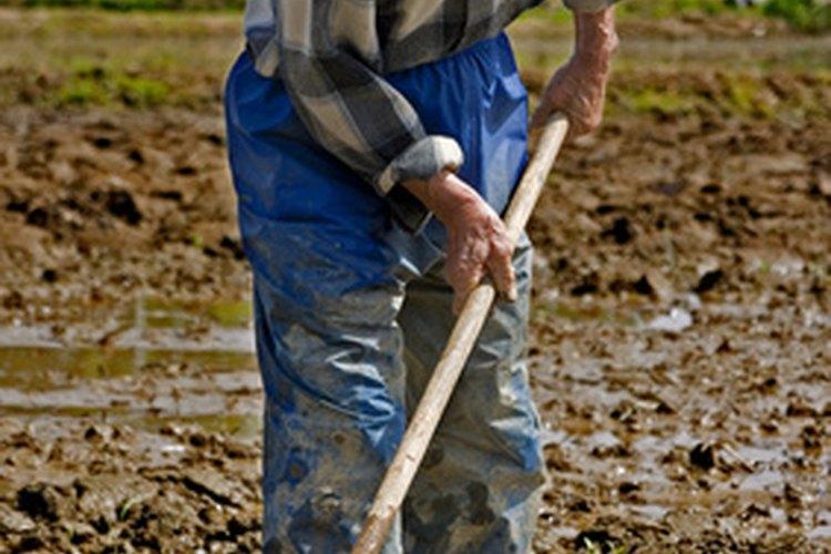 Evita sobre-regar la tierra con mal drenaje.