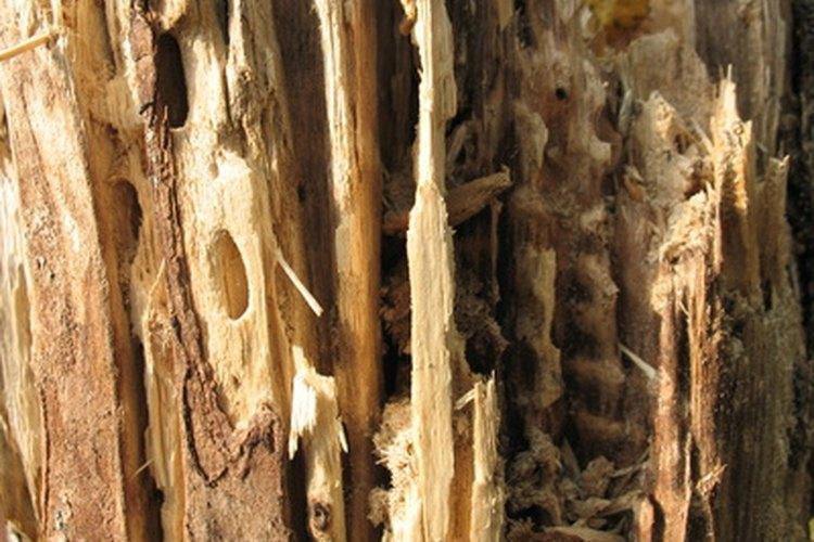 Las termitas pueden destruir los elementos de madera en tu casa.