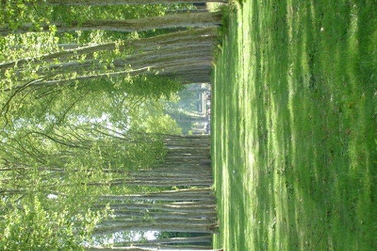 Miles de productos vienen de los árboles.