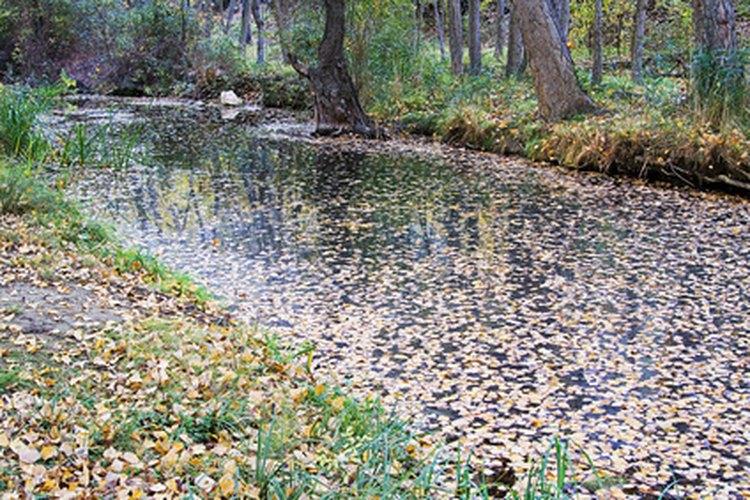 Los ríos contaminados con bolsas de plástico no sólo afectan a la fauna del lugar, sino que además afectan al paisaje.