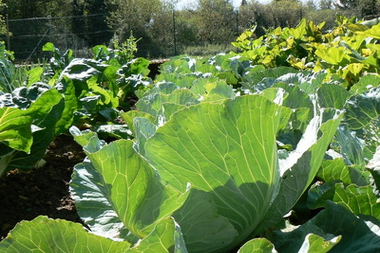 Algunos vegetales toleran la sombra parcial.