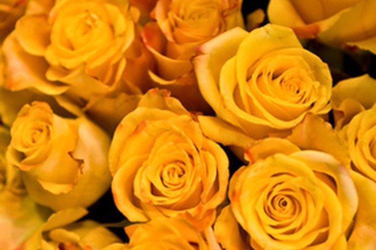 Cincuenta rosas amarillas causarán un impacto.