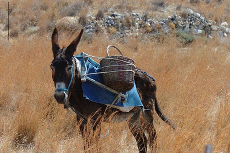 El buen samaritano puso al judío en su propio burro.
