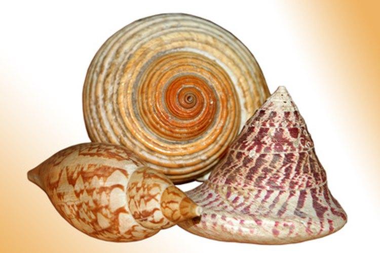 Las conchas marinas funcionan para hacer decorados únicos.