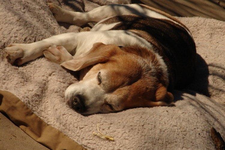 La ceguera puede facilitar la inactividad y el dormir en exceso.