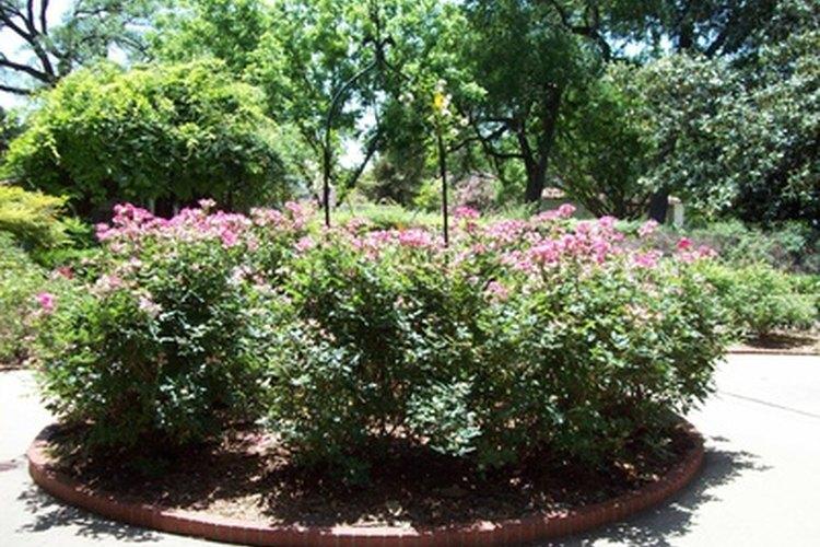 Los arbustos pueden crecer donde el clima es agradable, pero raramente prosperan en regiones muy frías.