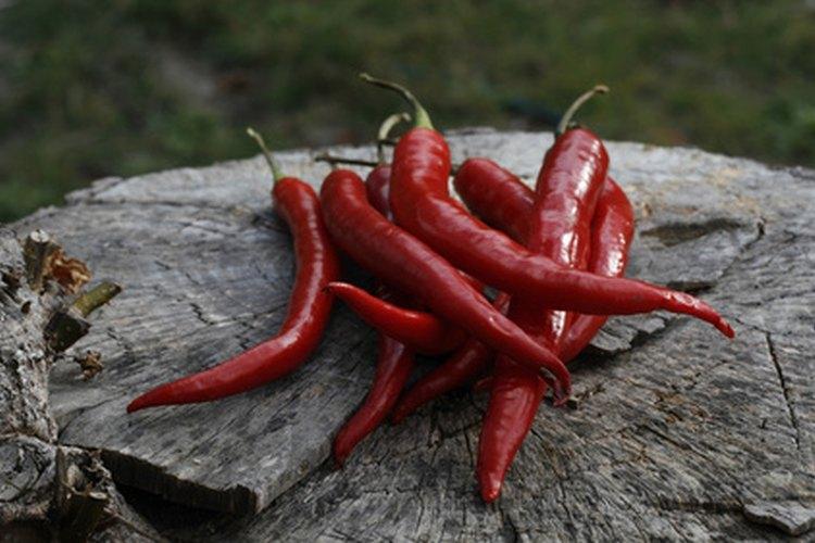 Los chiles de tabasco son utilizados para hacer la salsa tabasco.