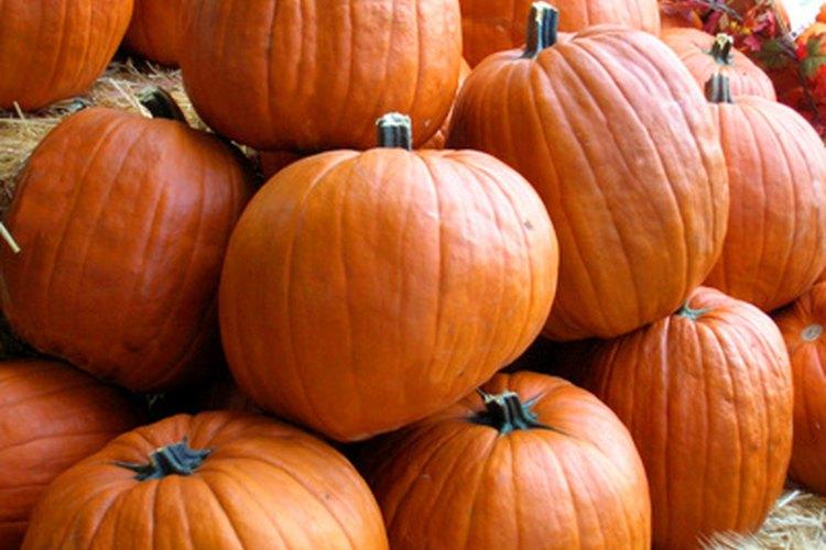 Tus cultivos de otoño, como las calabazas, necesitan gran cantidad de luz solar para tener una buena cosecha.