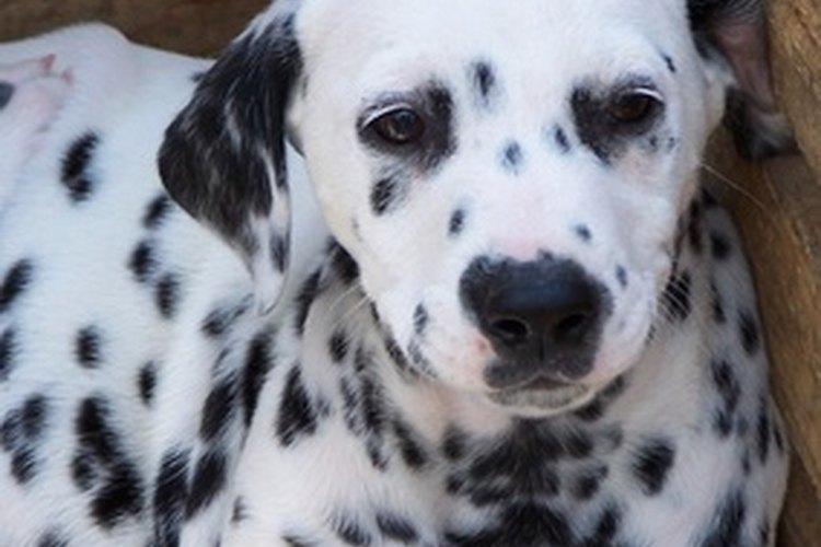 Desparasitar a tu mascota es parte del bienestar general del animal.