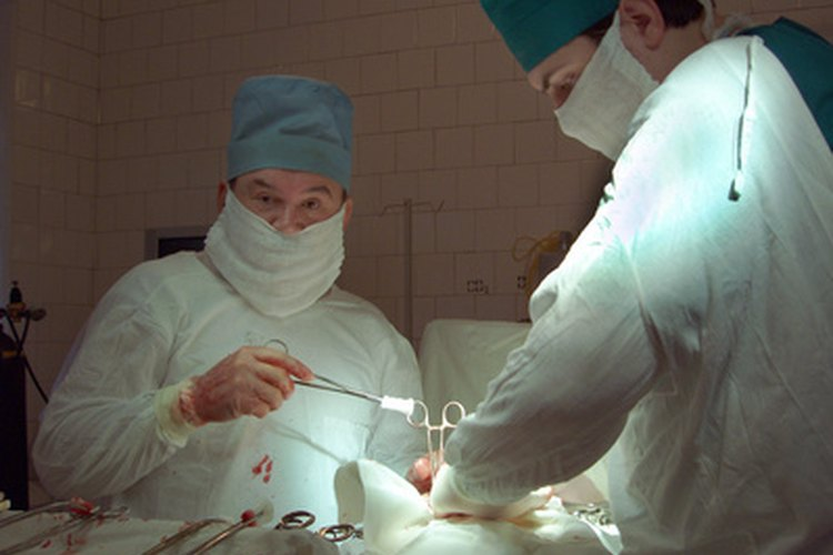 La mayoría de las cirugías de castración no se complican por infecciones.