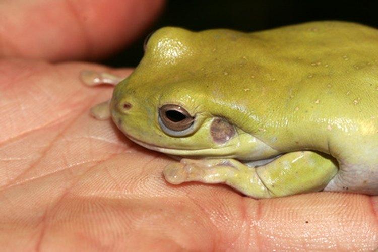 El índice de Shannon-Weaver busca la biodiversidad en un ecosistema.