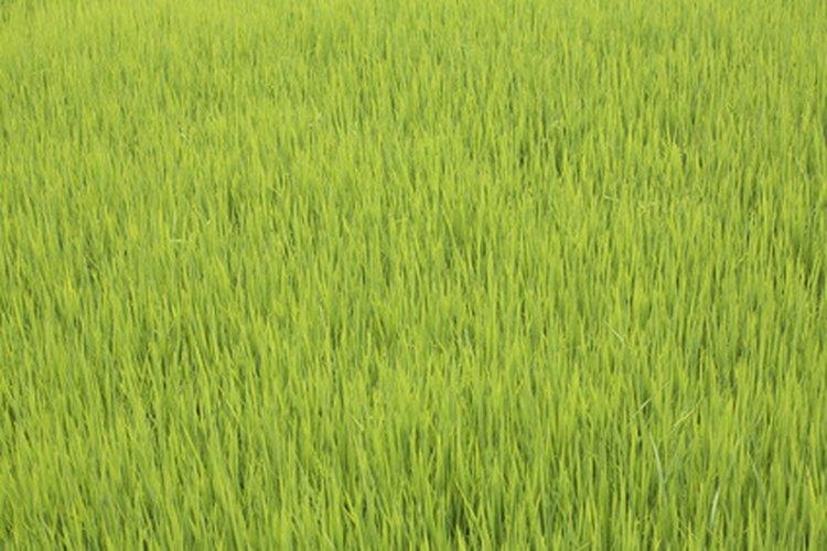 ¿Qué herramientas se usan para obtener arroz de los campos y llevarlos a las tiendas?