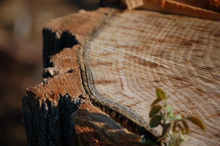 Los anillos de los troncos indican las capas del crecimiento de la madera.