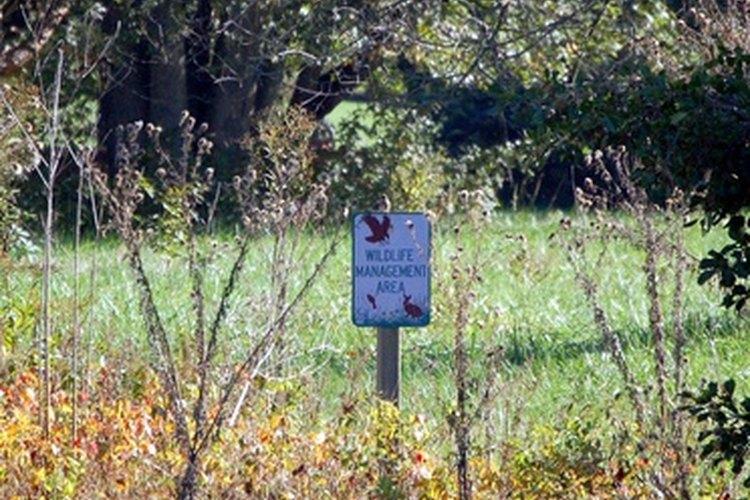 Los técnicos de vida salvaje trabajan en las reservas forestales y parques estatales.