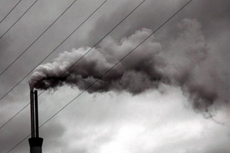 Las actividades humanas, como la industria, son las causas principales de la destrucción del ecosistema.