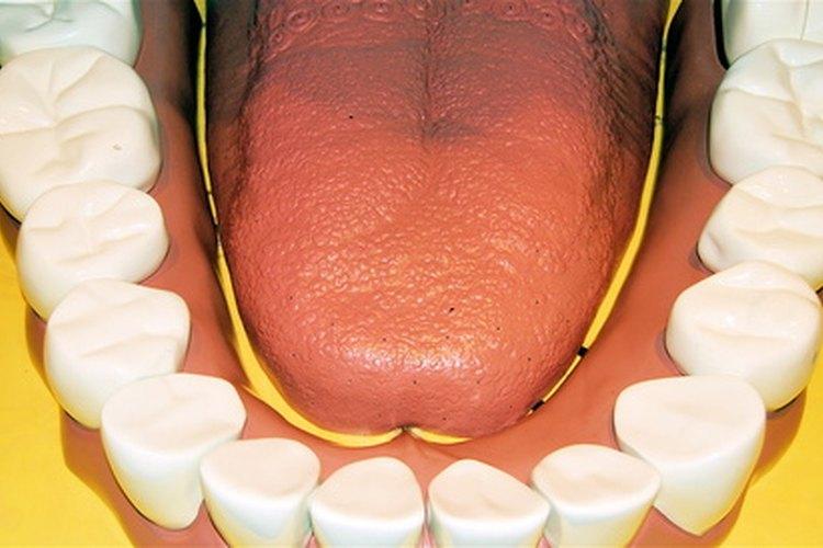 Los niños necesitan aprender desde el principio que el cuidado dental es muy importante.