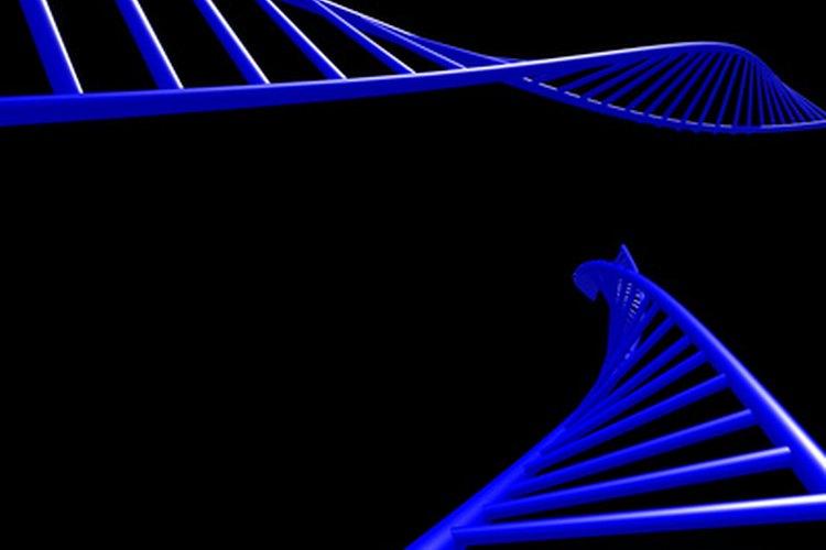 Tanto el ADN como el ARN controlan la síntesis de proteínas en las células.