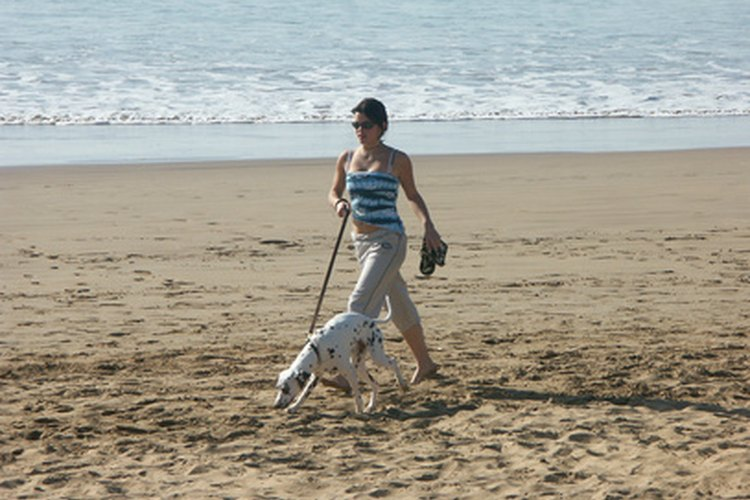 Disfruta de entrenar en la playa con tu perro con una correa.