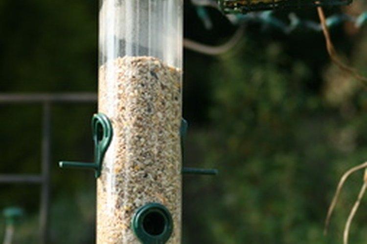 Las semillas niger son una comida popular para aves silvestres.