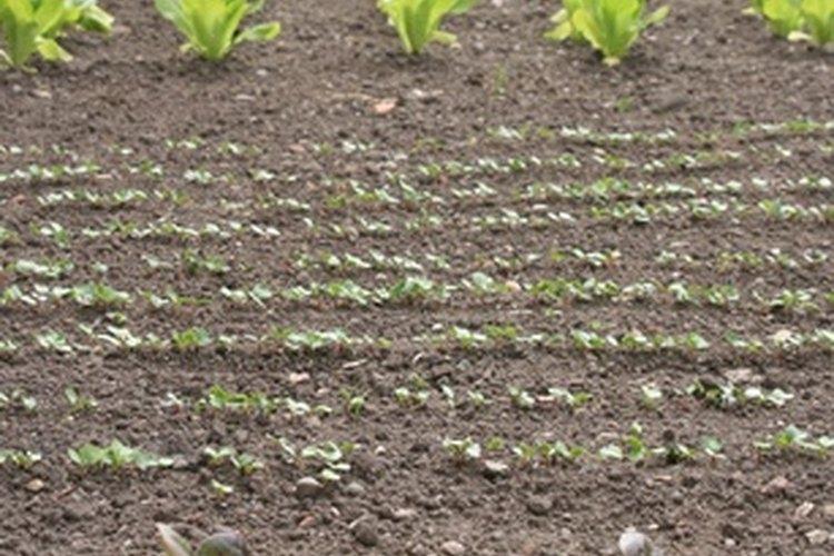 Jardín de verduras.