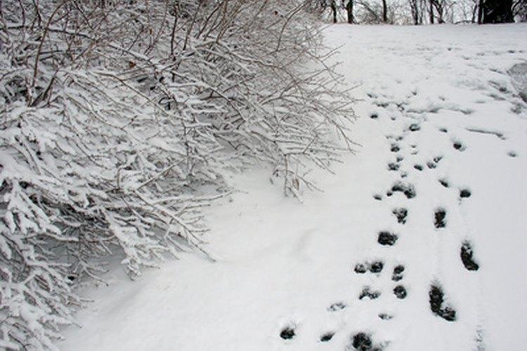Las actividades que ponen énfasis en la ropa enseñan a los niños lo que pueden usar en invierno.