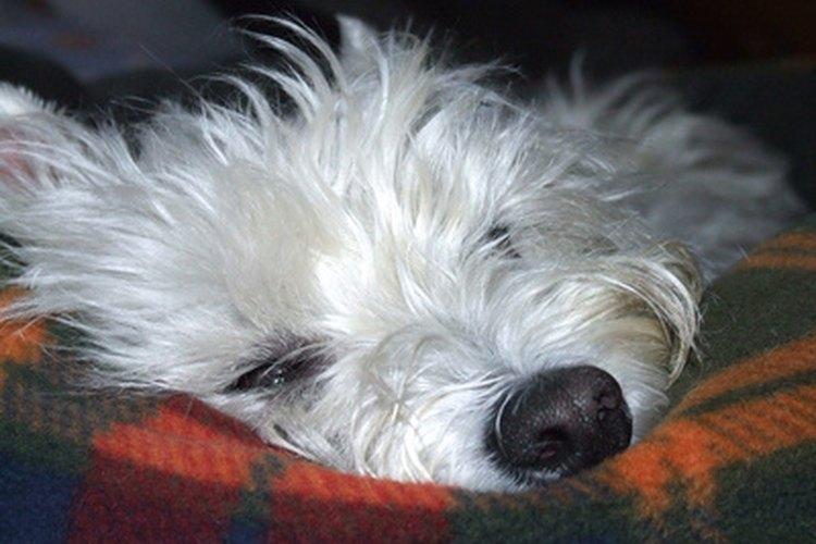 ¡Dale a tu perro su propio espacio para dormir!