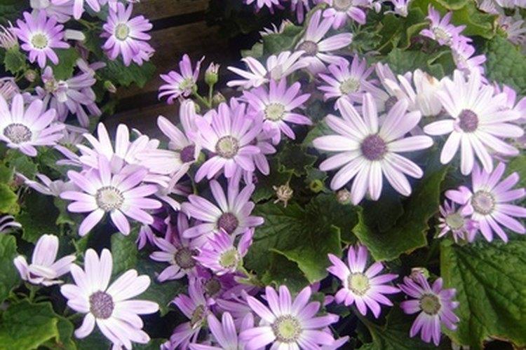 Enmarca tu verso bíblico favorito con flores prensadas.