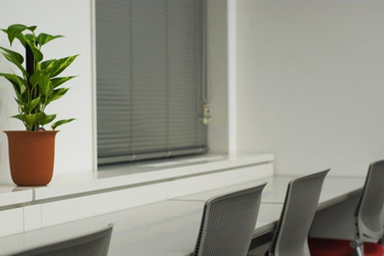Ciertas plantas pueden crecer sin ningún problema en áreas de la oficina con poca iluminación.