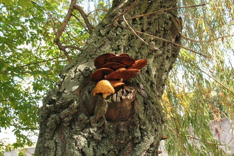 Un hongo de árbol.