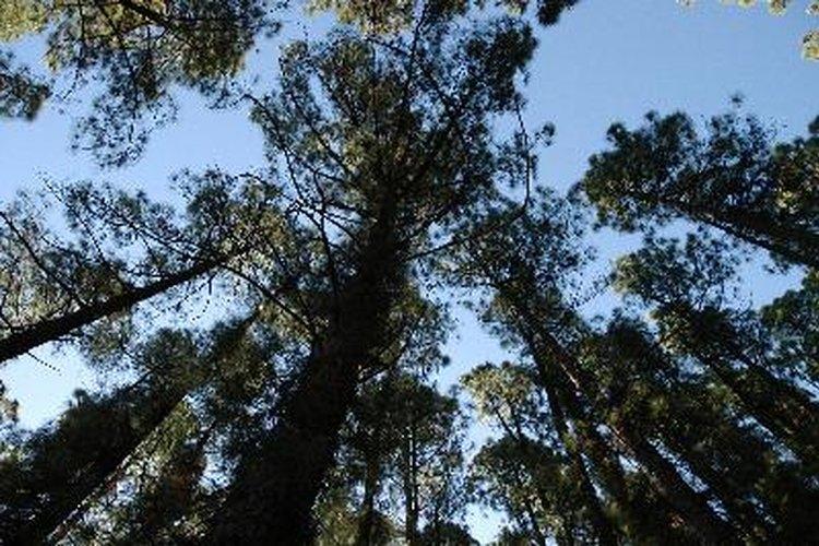 Árboles de selva tropical.