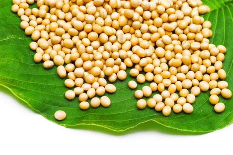 La soja es una buena fuente de proteínas y carbohidratos.