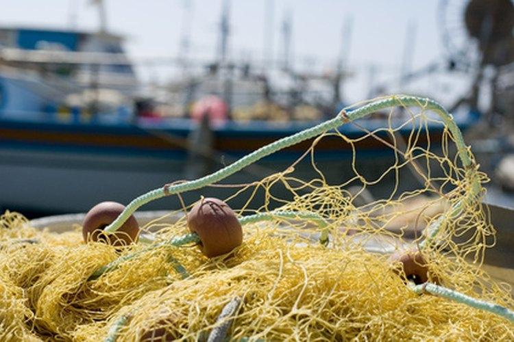 Las redes de pesca a menudo enredad y lesionan a los leones marinos.