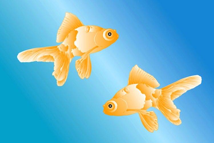 El símbolo de Piscis son los peces y está regido por el planeta Neptuno.