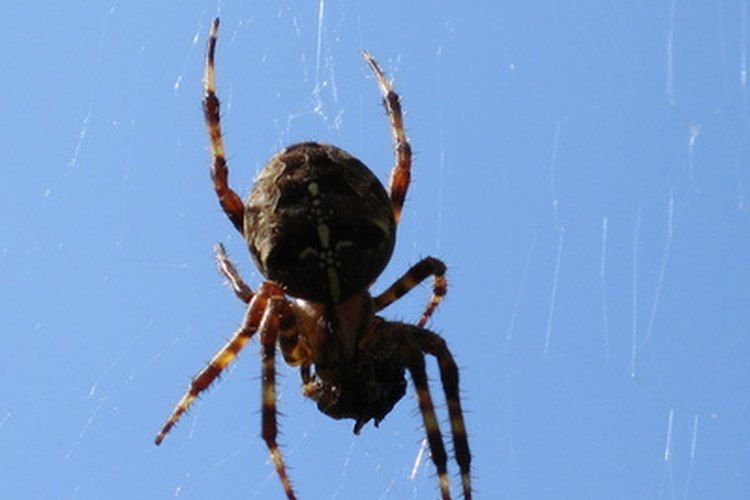 El disfraz de araña es muy fácil de hacer.